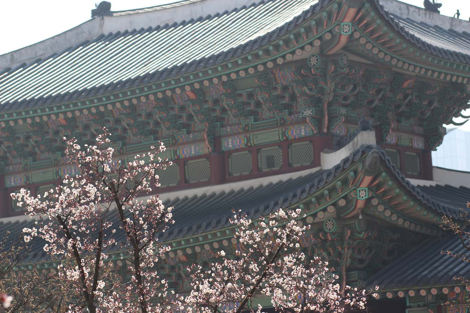 changdeokgung palace in seoul, south korea