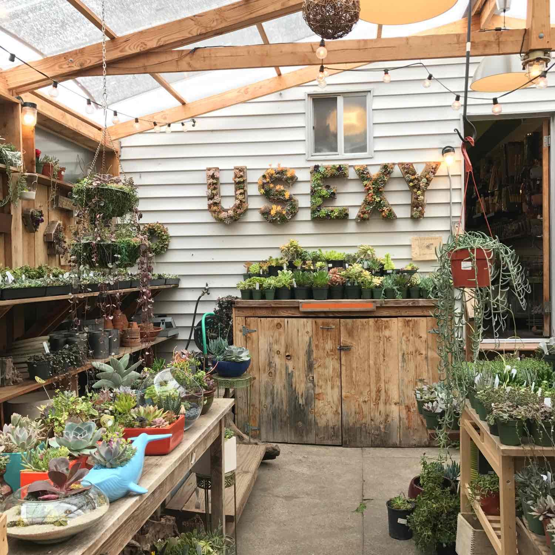 succulent shop succulence