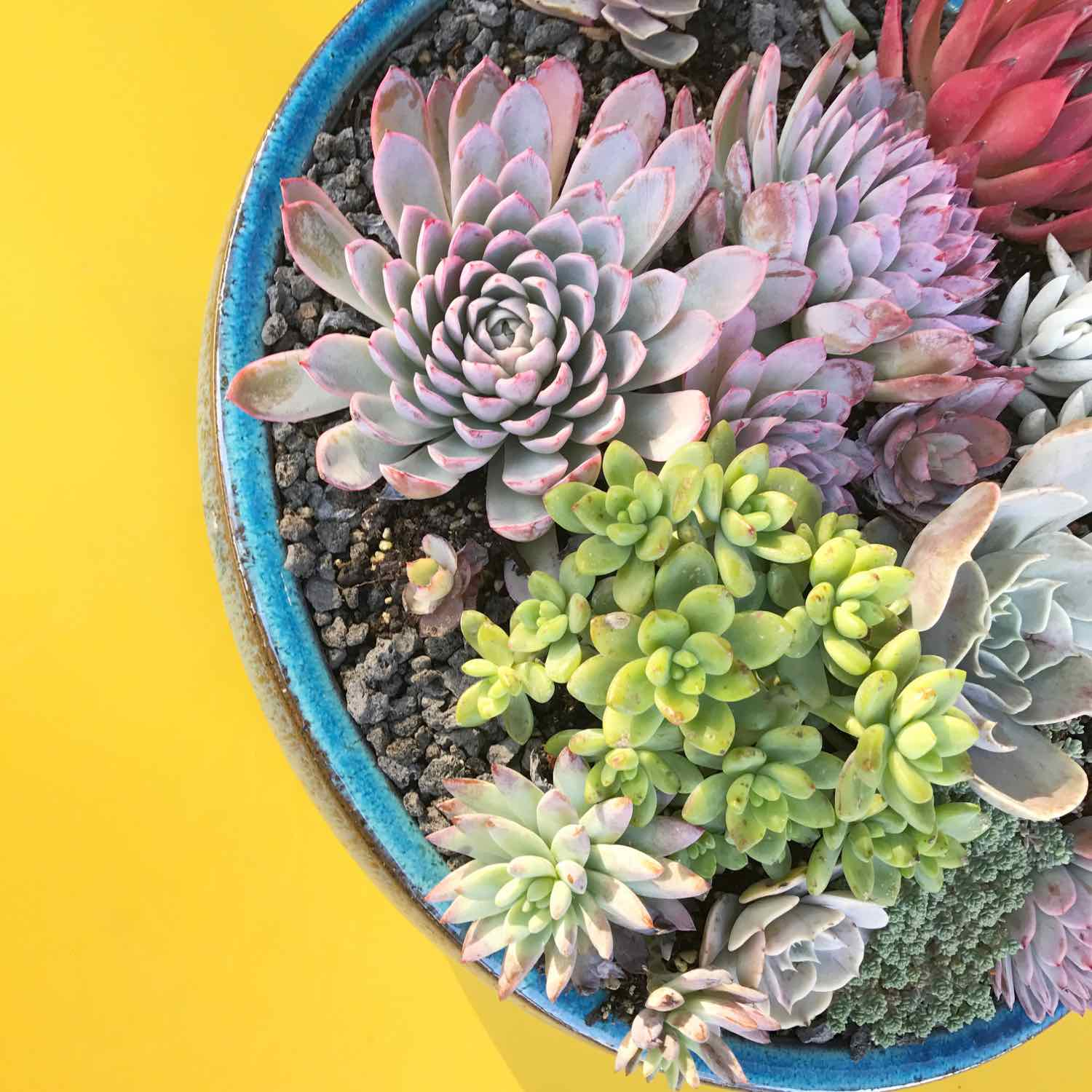 where to buy succulents in san francisco - flora grubb