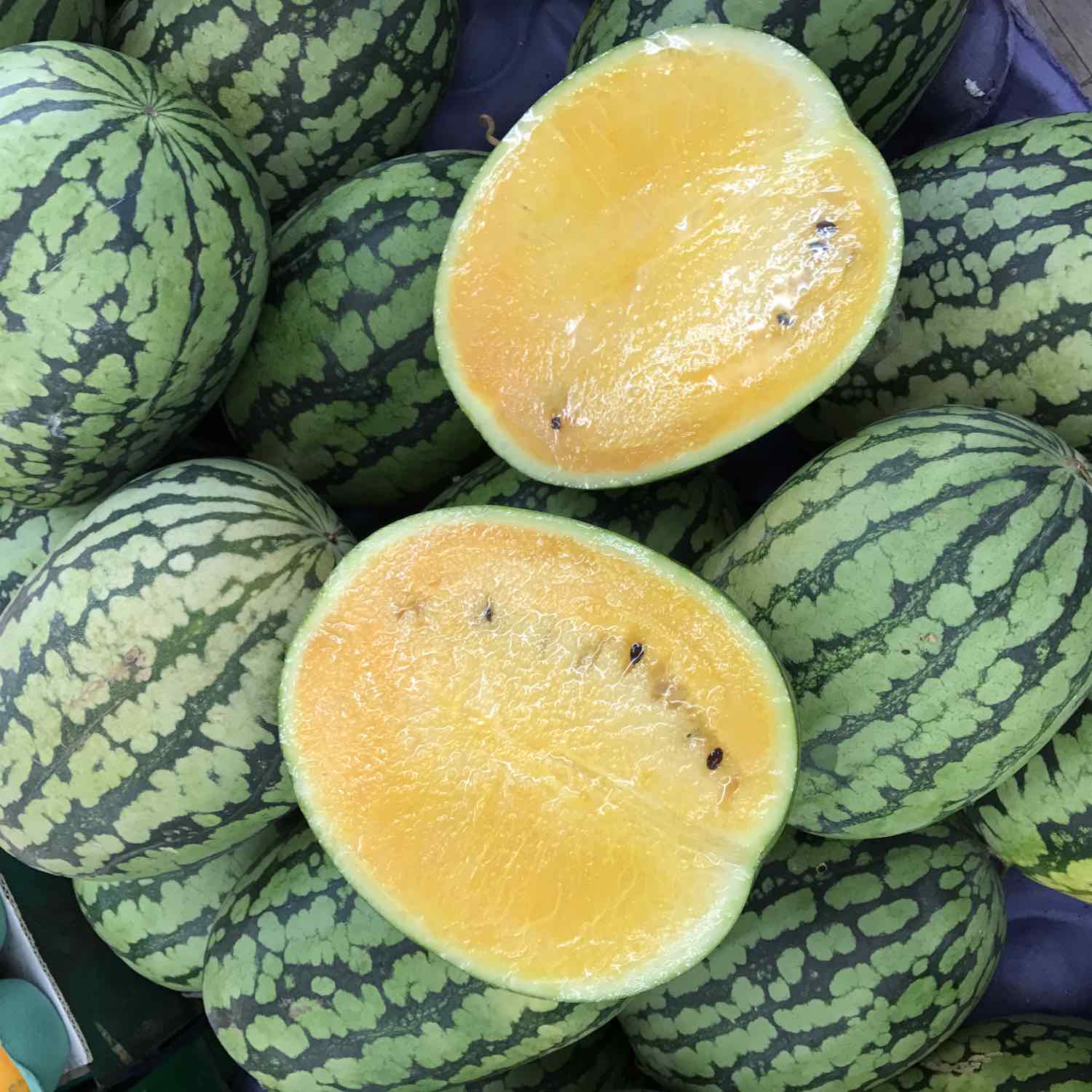 taiwanese yellow watermelon