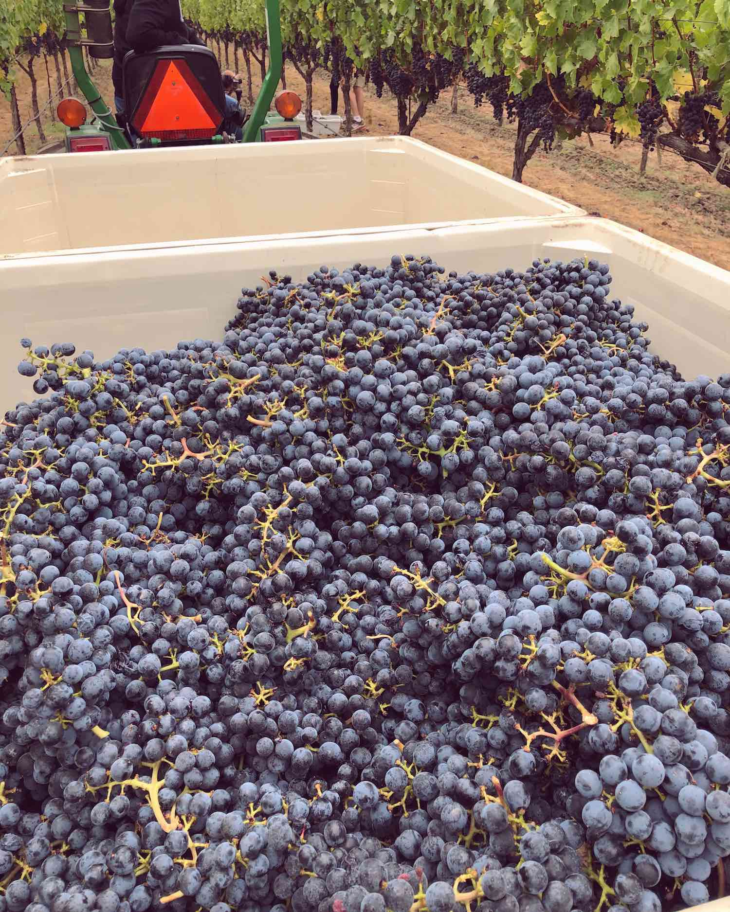 Trefethen Family Vineyards - Cabernet Sauvignon Harvest 2018