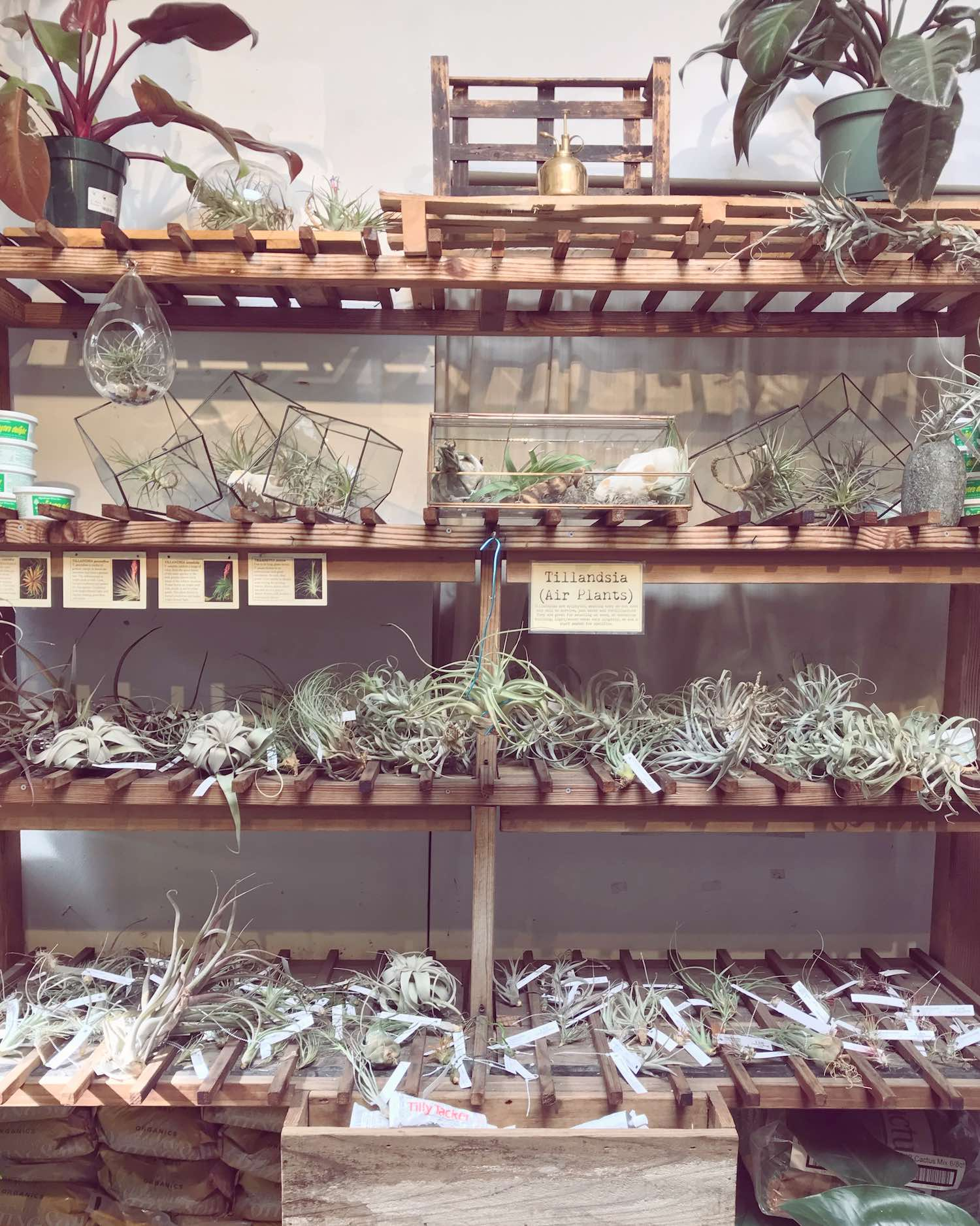 Air Plants at Paxton Gate San Francisco - Small Business Saturday